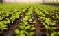 Professionele tuinbouw - M-plastics